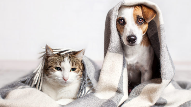 Simple Tips On Keeping Your Home Warm During the Winter